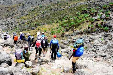 Etape entre Barranco et Karanga, Kilimanjaro - Tanzanie -