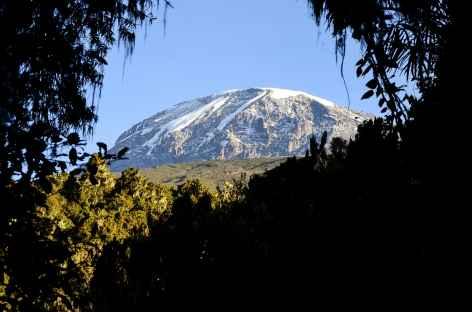 Descente sur Mweka Gate à travers la forêt équatoriale, Kilimanjaro - Tanzanie -