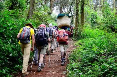 Montée sur Machame Camp (3000 m), à travers la forêt équatoriale, Kilimanjaro - Tanzanie -