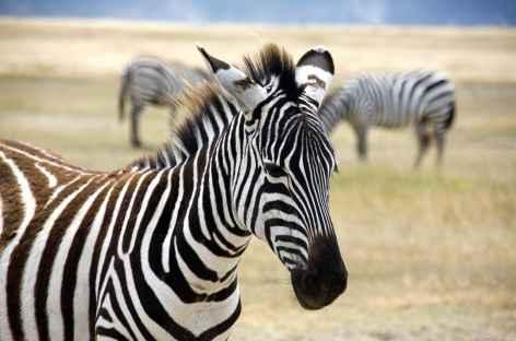 Safari au Ngorongoro - Tanzanie -