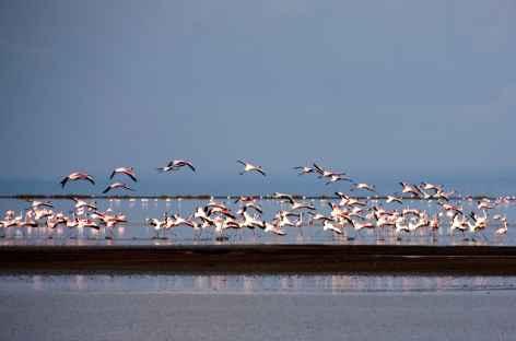 Flamants roses du Lac Natron - Tanzanie -