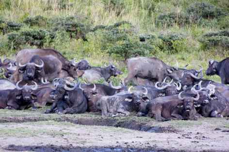Troupeau de buffles - Tanzanie -