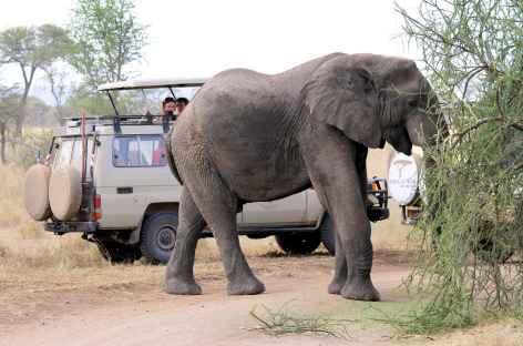 Rencontre en safari... - Tanzanie -