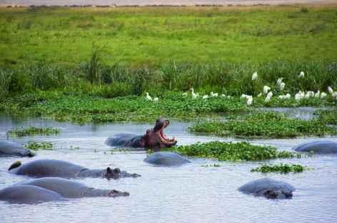 Hippo Pool, secteur de Seronera, Parc national du Serengeti - Tanzanie -