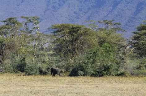 Dans la caldeira du Ngorongoro -