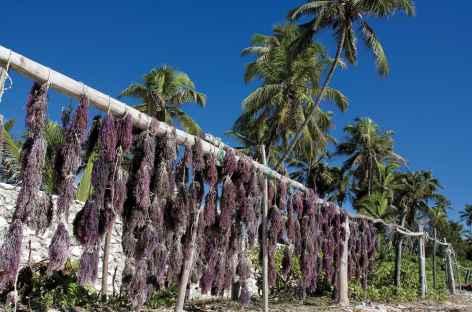 Algues séchées, côte est de Zanzibar - Tanzanie -