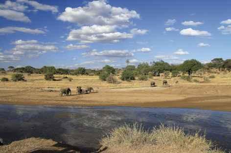 Eléphants, Parc national du Tarangire - Tanzanie -