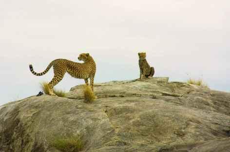 Guépards sur un kopje granitique du Serengeti - Tanzanie -