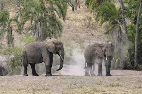 Elephants vers Seronera, Serengeti - Tanzanie -