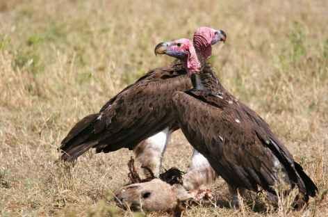 Vautours, caldeira du Ngorongoro - Tanzanie -