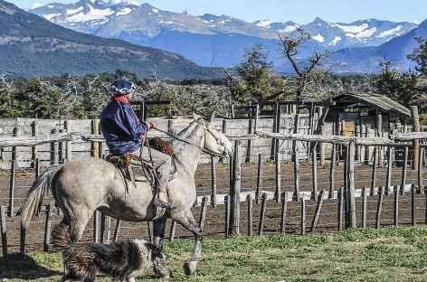 Gaucho et son fidèle chien à l'estancia Nibepo Aike - Argentine -