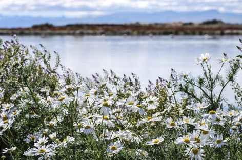 Au bord du lac Argentino - Argentine -
