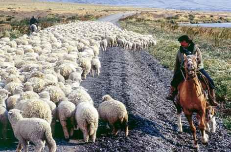 Ambiance typique de Patagonie -
