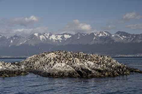 Navigation sur le canal de Beagle, une île couverte de cormorans - Argentine -