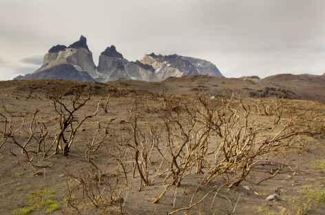 Ambiance dans le parc Torres del Paine - Chili -