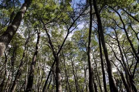 Dans les forêts patagones - Argentine -