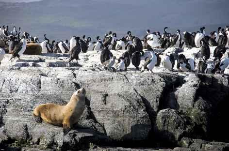 Navigation dans le canal de Beagle - Argentine -