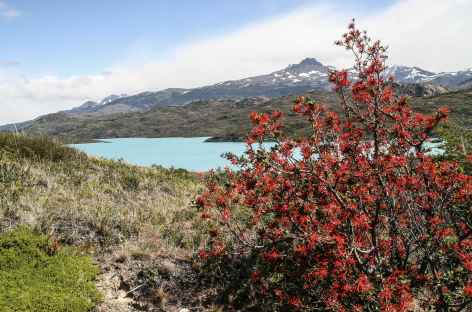 Parc national Torres del Paine, le lac Pehoe - Chili -