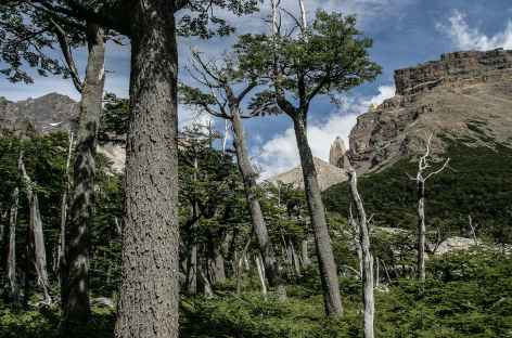 Torres del Paine, marche vers le camp de base des 3 tours du Paine - Chili -