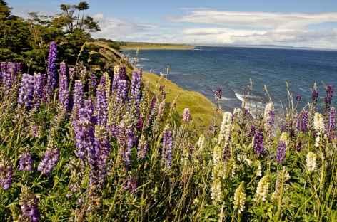 Lupins et lac dans la pampa - Patagonie - Argentine -