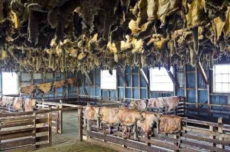 Un atelier de tonte de moutons dans une estancia - Patagonie - Argentine -