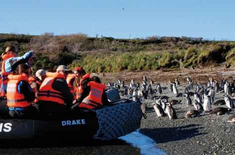 Observation des manchots de Magellan sur les îlots Tuckers - Chili -