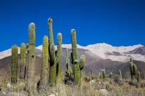 Entre Salta et Cachi - Argentine -