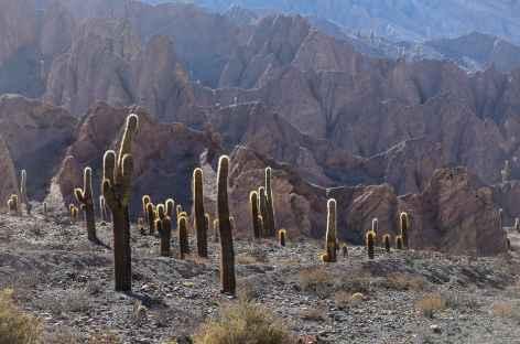 Les cactus candélabres - Argentine -