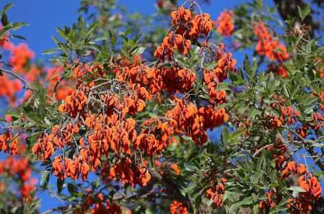 Flore du Nord-Ouest argentin - Argentine -
