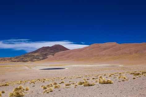 Au coeur de la puna - Argentine -