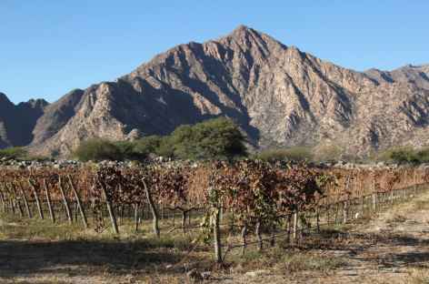 Vignoble de Cafayate -