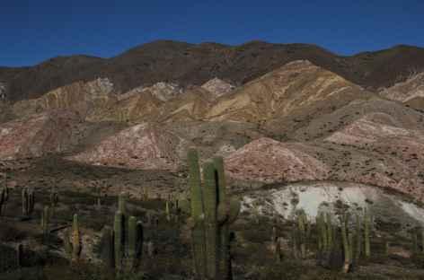 Le parc national Los Cardones -