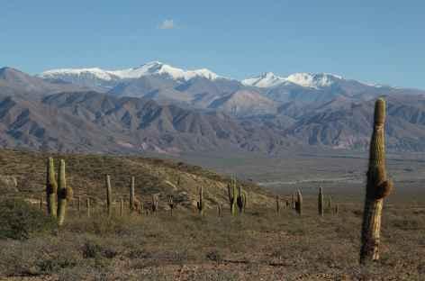 Argentine, Parc National Los Cardones et Nevado Cachi -