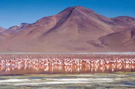 Volcan, flamants et lagune dans le sud Lipez - Bolivie -