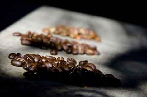 Une plantation de café dans les Yungas - Bolivie -