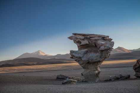Arrêt à l'arbre de pierre - Bolivie -