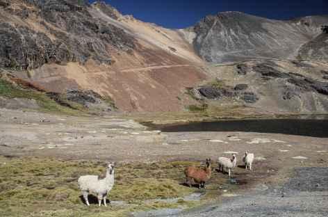 Lamas et lagune près de Mina Aguila - Bolivie -