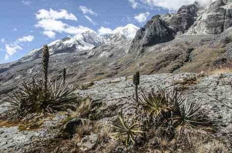 Cordillère Royale, vers la mina Susana - Bolivie -