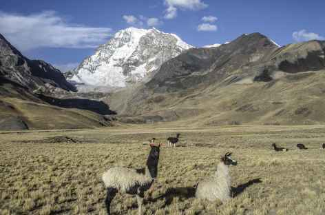 Cordillère Royale, au pied de la face ouest du Huayna Potosi - Bolivie -
