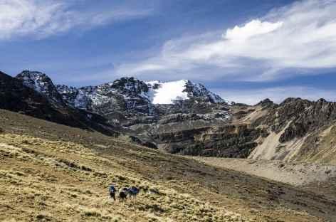 Cordillère Royale, en chemin vers la lagune Ajwani- Bolivie -