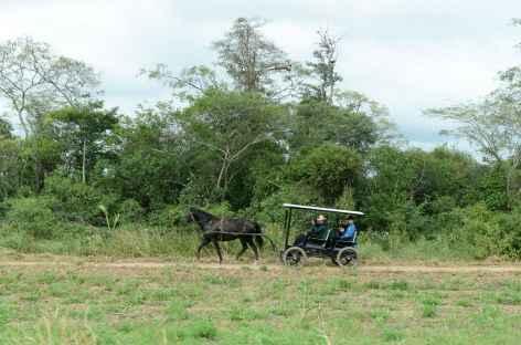 Charrette d'une famille mennonite - Bolivie -