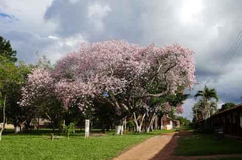 La place de Santa Ana avec ses magnifiques toborochi - Bolivie -