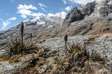 Dernier regard sur l'Illampu - Bolivie -