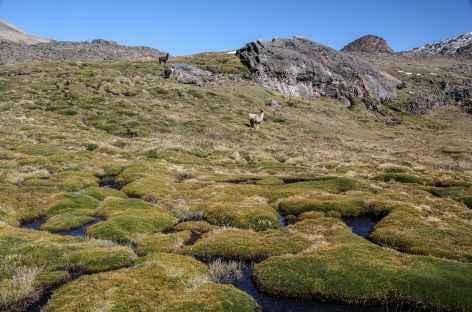 Bofedales dans la vallée de la lagune Altarani - Bolivie -