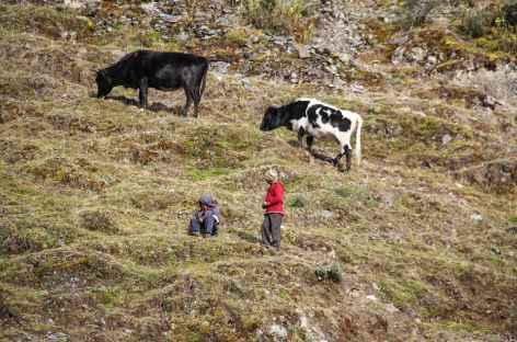 Bergers au-dessus de Kanisaya - Bolivie -