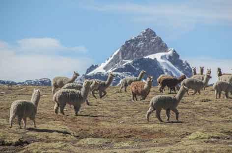 Arrivée au col Pelechuco - Bolivie -