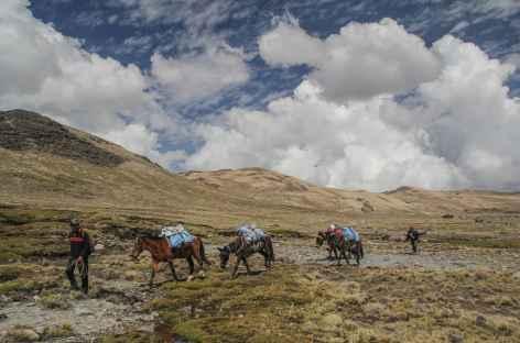Notre caravane à l'approche de la lagune Pujo Pujo - Bolivie -