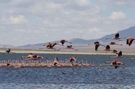 Bolivie, lagunes de Tajzara dans la Cordillère Sama -