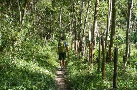 Sentier ombragé dans la Chapada Diamantina - Brésil -