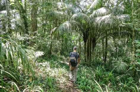 Au coeur de la forêt Atlantique - Brésil -